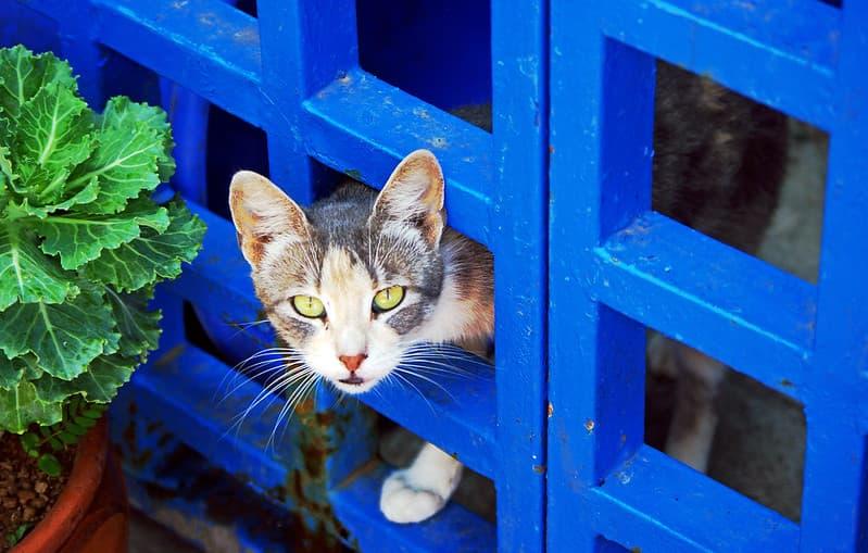 Article améliorer le bien-être animal, loi protection animaux 2021