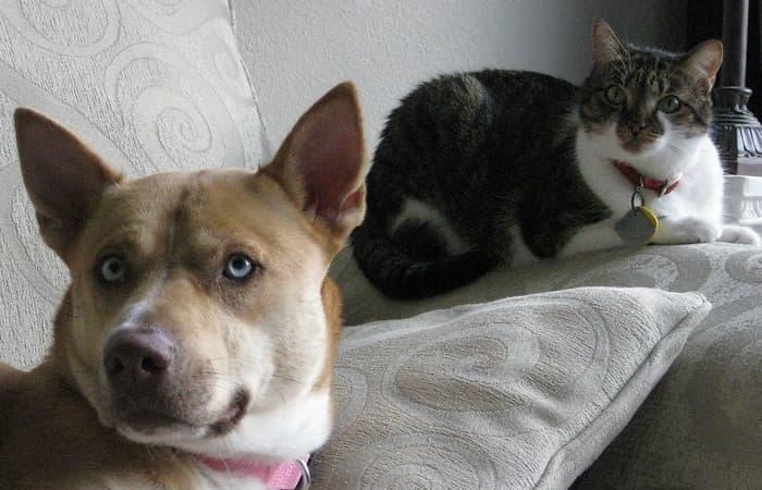 Image chien et chat ensemble pour page animal de compagnie mort que faire ?