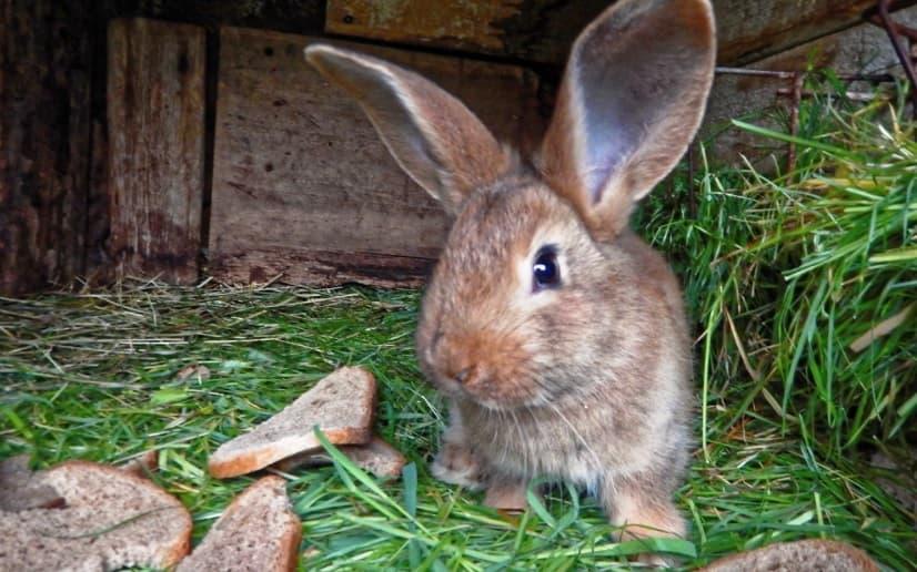 Eduquer un lapin domestique: comment bien le dresser ?